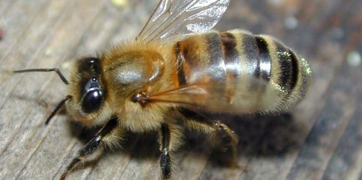 """""""Європа – це добре, але є внутрішній споживач"""": чому прикарпатські бджолярі не продають мед у ЄС 3"""