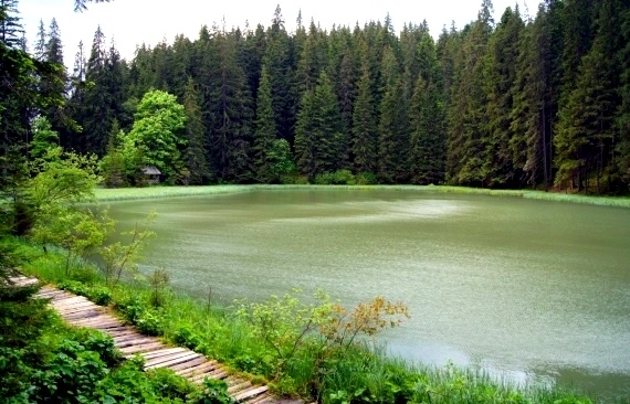 Яловичора озеро
