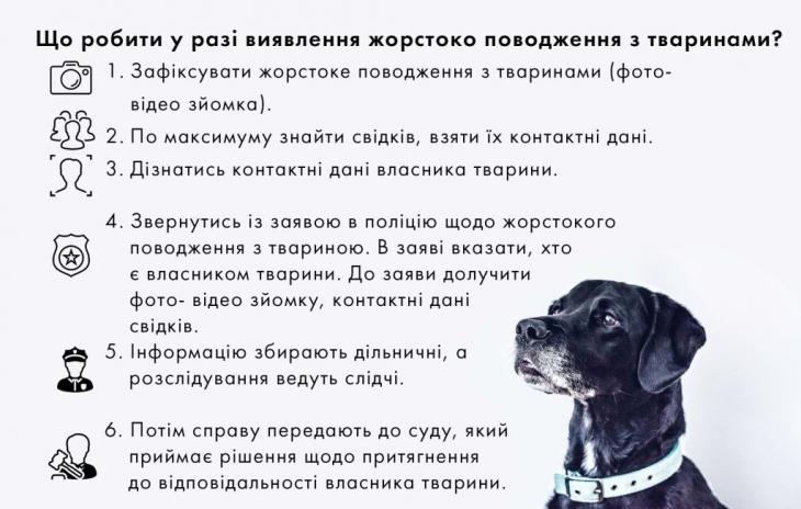 """Закон є, відповідальності нема: як """"карають"""" за жорстоке поводження з тваринами 2"""