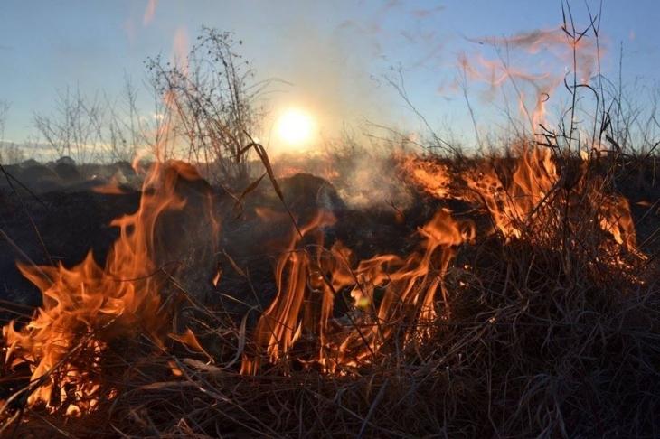"Результат пошуку зображень за запитом ""загинув спалюючи суху траву"""