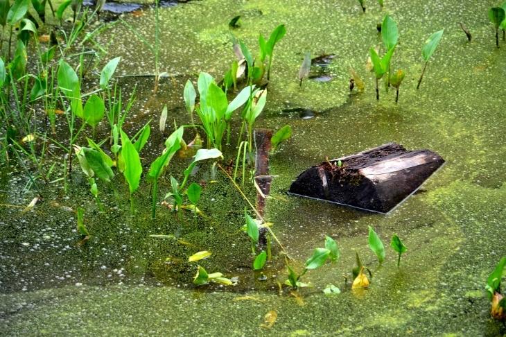 У пошуках карпатського крокодила 9