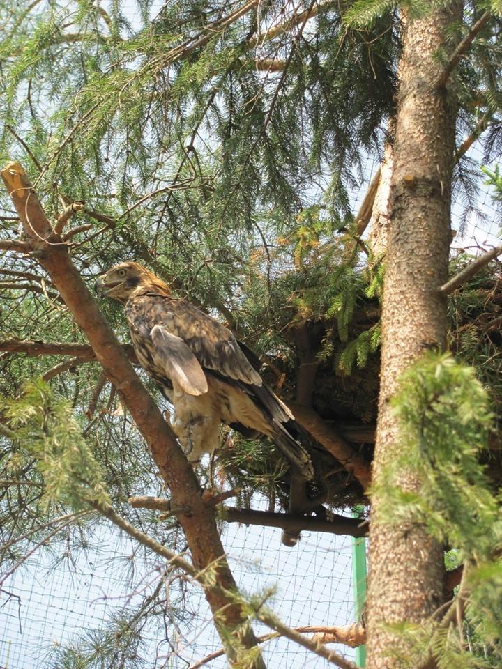 У Центр реабілітації диких тварин прибули конфісковані орел та яструби. ФОТО 4
