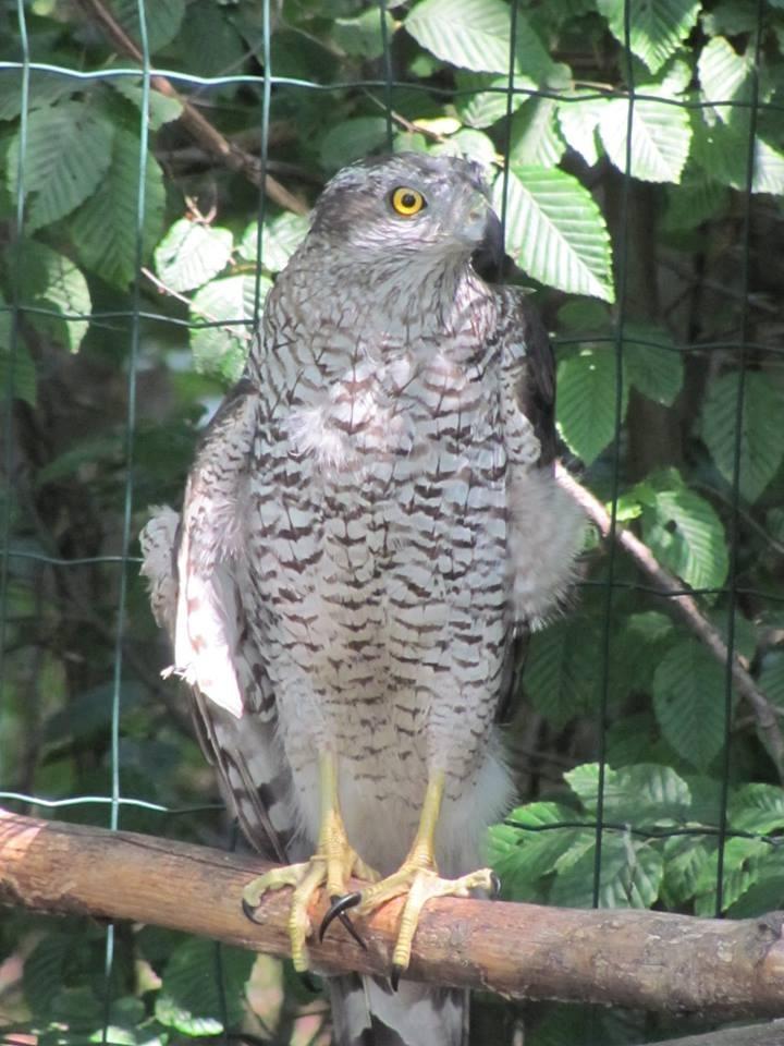 У Центр реабілітації диких тварин прибули конфісковані орел та яструби. ФОТО 2