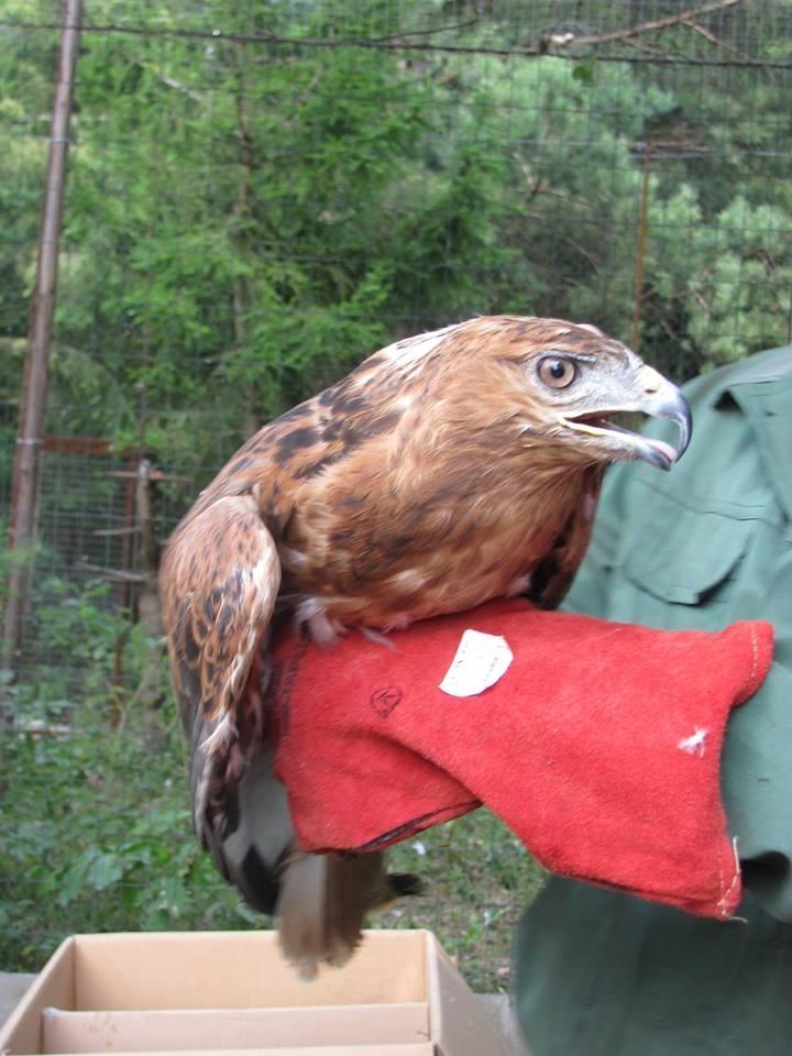У Центр реабілітації диких тварин прибули конфісковані орел та яструби. ФОТО 6
