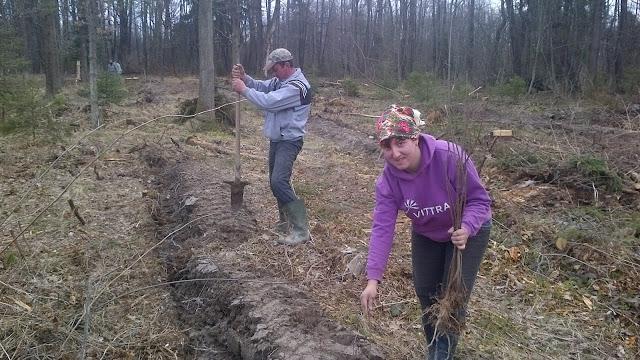 На Коломийщині цьогоріч лісівники висадять понад 80 тисяч саджанців