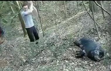Жорстоке вбивство тварини: з'явилося відео, як на Прикарпатті молодики палицями щодуху гамселять молодого кабана (відео 18+)