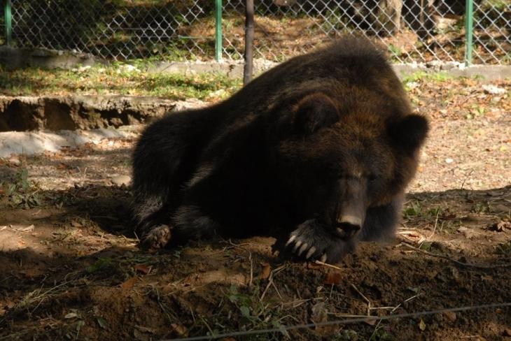 """Результат пошуку зображень за запитом """"ведмеді в галицькому нпп"""""""