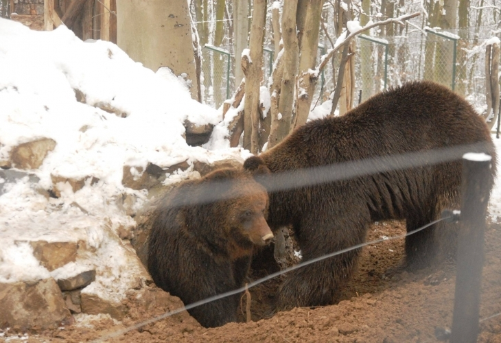 """Результат пошуку зображень за запитом """"галицький НПП ведмеді"""""""
