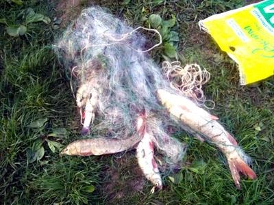 На Дністрі рибінспектори спіймали браконьєра, який сітками ловив червонокнижних марен