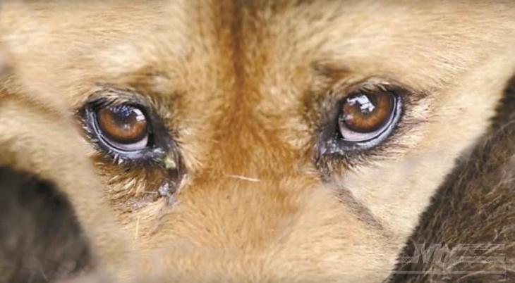 У Долині продовжують труїти собак – мешканці звернулися до поліції із колективною заявою (відео)