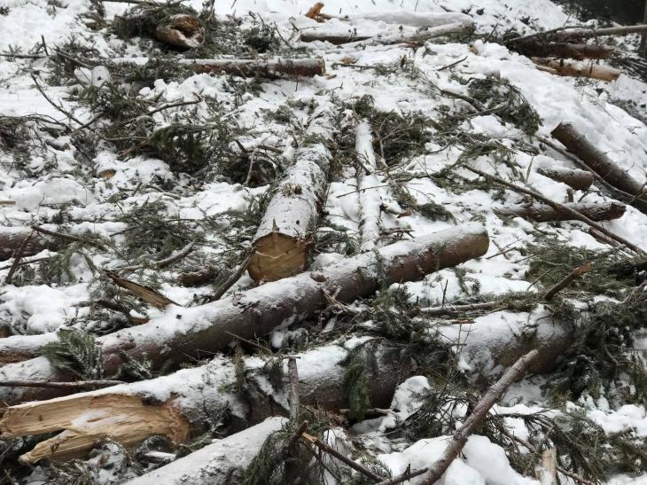 На Косівщині екологи зафіксували незаконну рубку на понад 300 тисяч гривень