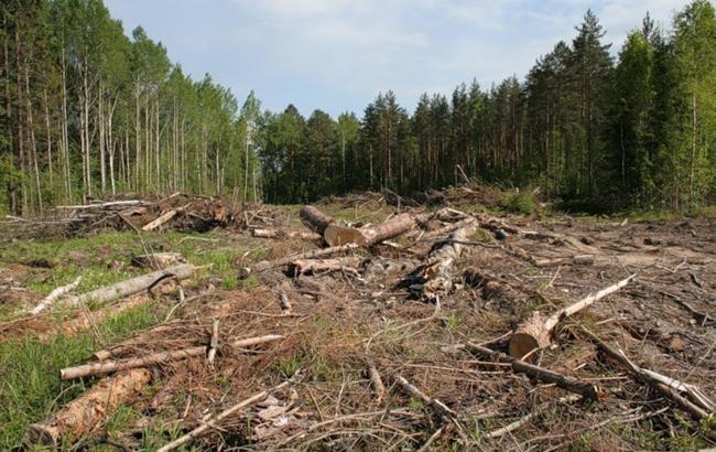 """Суд арештував деревину і техніку, які правоохоронці знайшли на місці рубки у """"Чорному лісі"""""""