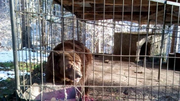 Екологи через суд спробують забрати ведмедя у власника косівського готелю