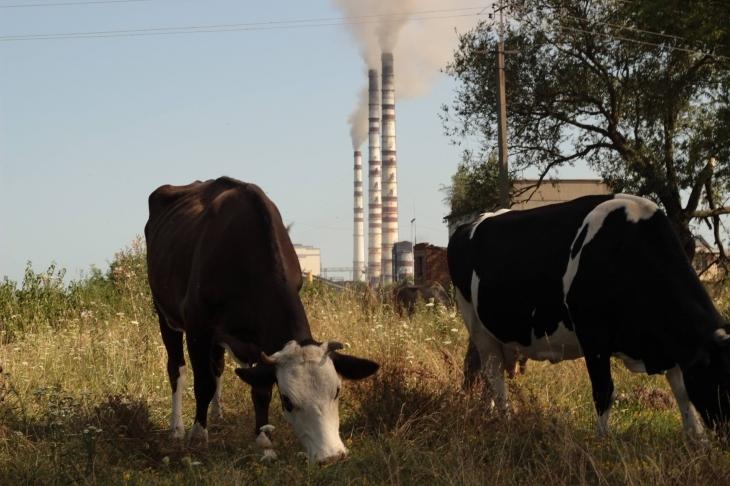 Що мешканці Прикарпаття знають про стан довкілля і як угода з ЄС допоможе знати більше 1