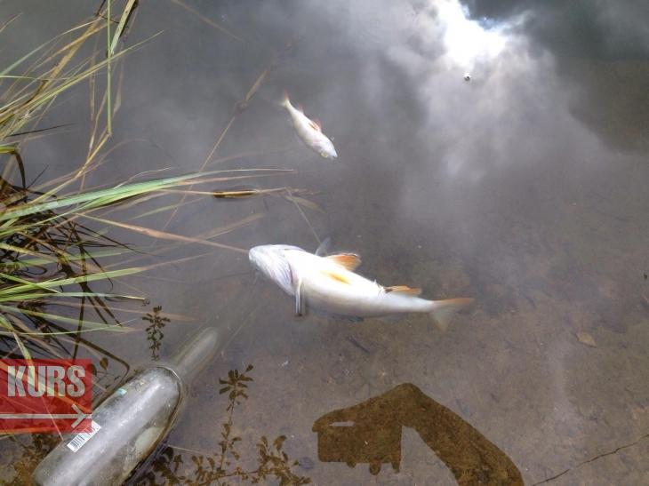 В Івано-Франківську в озері на Товарній масово загинула риба. ФОТО 2