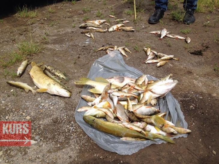 В Івано-Франківську в озері на Товарній масово загинула риба (фоторепортаж)