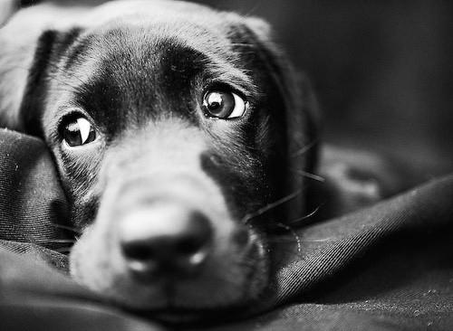 Марцінків розповів, як буде боротися з безпритульними собаками та коли відкриє майданчик для вигулу тварин