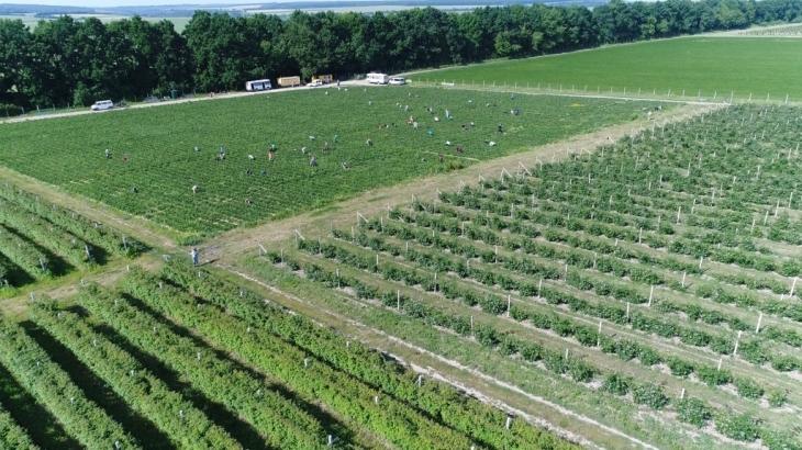 """Результат пошуку зображень за запитом """"Аграрії Прикарпаття зібрали більше одного мільйона тонн картоплі"""""""