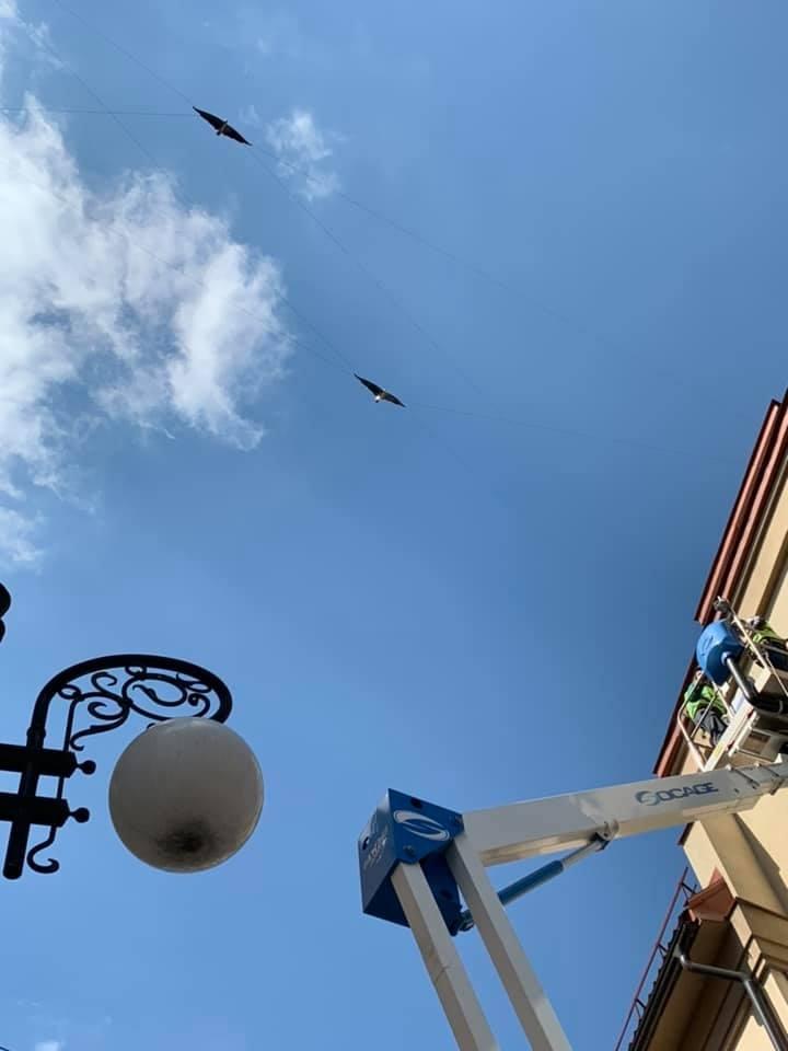 """Півтора десятка кованих птахів """"зависли"""" у повітрі в середмісті Франківська. ФОТО 2"""