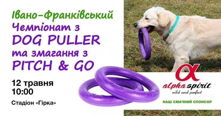 """Для расових і """"тузиків"""": у Франківську влаштовують спортивні змагання серед собак 1"""