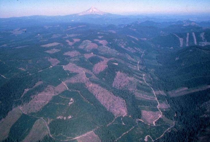Навіть у США з XIX століття ліси не приватизують, а у нас хочуть приватизувати, – експерт. ІНФОГРАФІКА 2