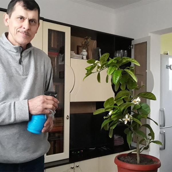 Франківець 30 років вирощує екзотичні плодові дерева (фото)