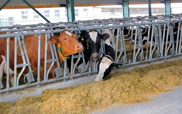 На Івано-Франківщині планують збудувати біогазовий завод на фермі