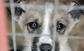 """Результат пошуку зображень за запитом """"Коломийський притулок для тварин переповнений, собак підкидають, потрібна їжа (відео)"""""""