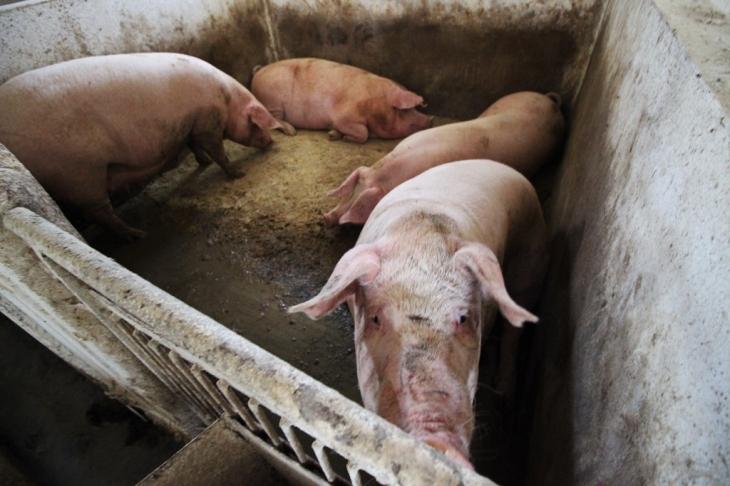 Як їм вдається: родина прикарпатських фермерів Книшуків готова годувати Європу 22