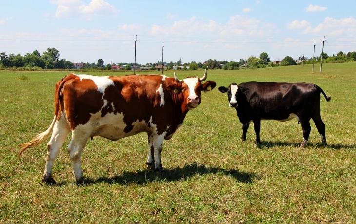 Як їм вдається: родина прикарпатських фермерів Книшуків готова годувати Європу 6