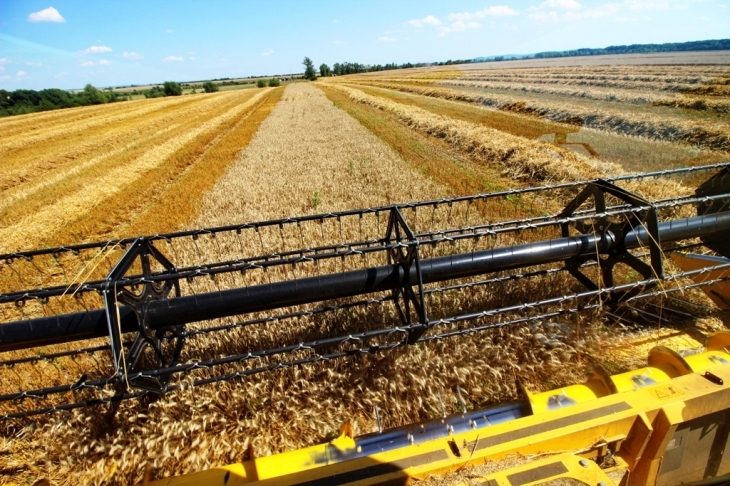 Як їм вдається: родина прикарпатських фермерів Книшуків готова годувати Європу 20