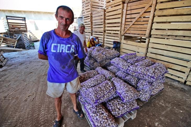 Як їм вдається: родина прикарпатських фермерів Книшуків готова годувати Європу 16