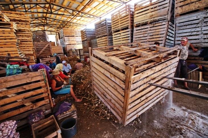 Як їм вдається: родина прикарпатських фермерів Книшуків готова годувати Європу 18