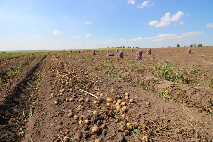 Як їм вдається: родина прикарпатських фермерів Книшуків готова годувати Європу 4