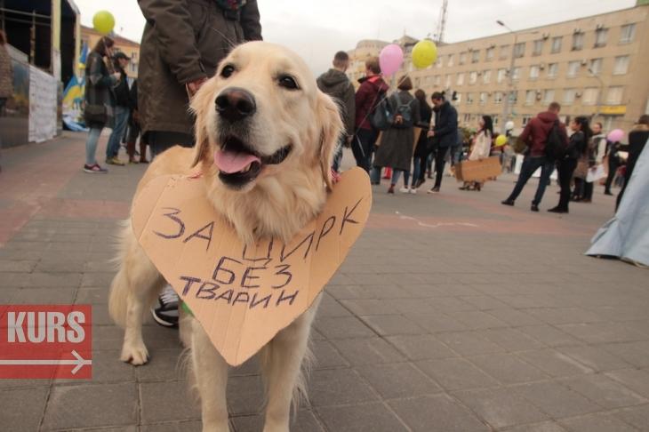 У Франківську суд скасував заборону на пересувні цирки з тваринами