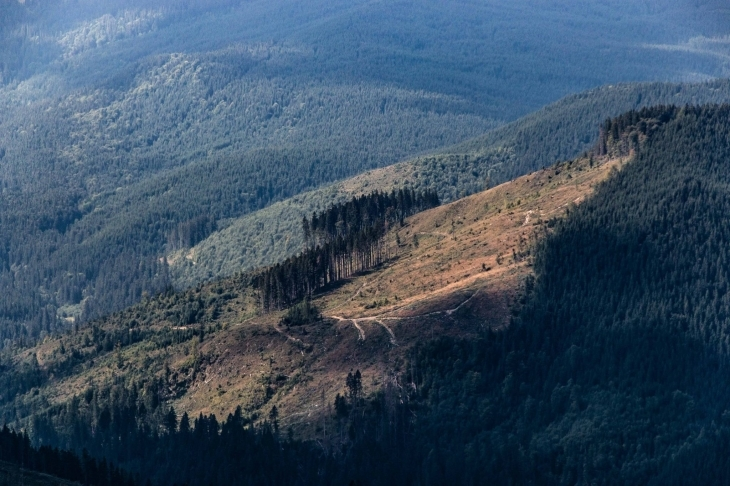 """На Косівщині у НПП """"Гуцульщина"""" під виглядом санітарних рубок масштабно вирубують здоровий ліс (відео)"""