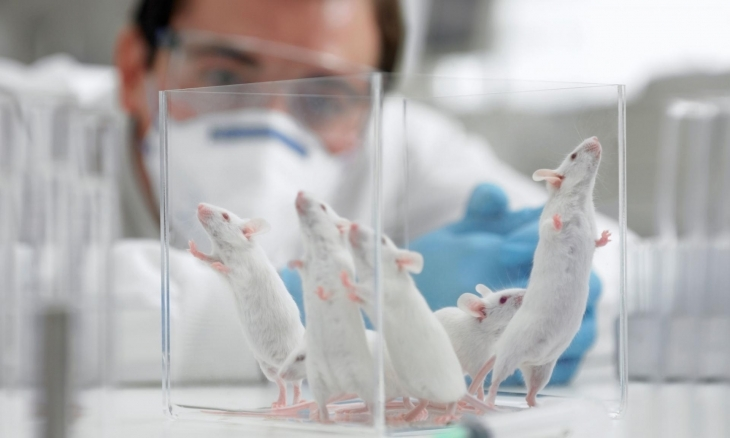 """Результат пошуку зображень за запитом """"Біохіміки у Прикарпатському національному університеті досліджують процеси старіння"""""""