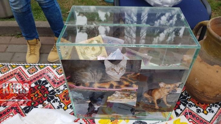 У Франківську готують бограч, глінтвейн і печуть гарбузи, щоб допомогти безпритульним котам і собакам. ФОТО 4