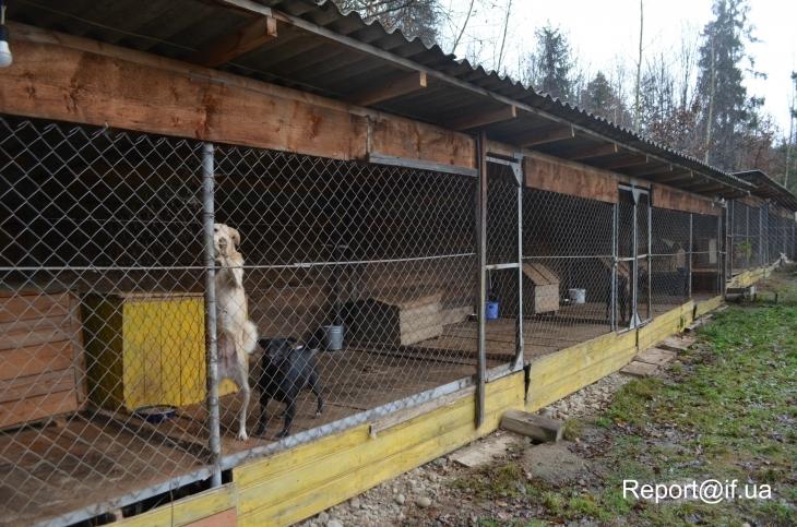 Франківчанка переїхала в село, щоб дати притулок півсотні котів і собак (фотофакт)