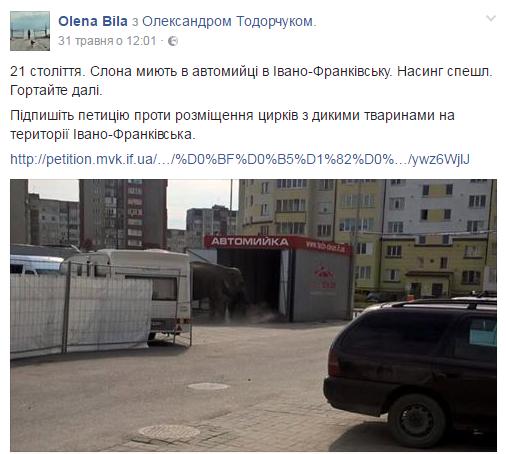 Слон на автомийці в Івано-Франківську: відкрилася таємниця фото, що підкорило мережу 1