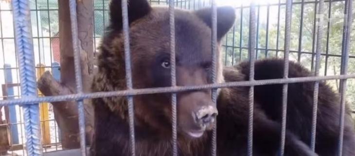 Власники турбази на Прикарпатті готові віддати ведмедя, який напав на туристку