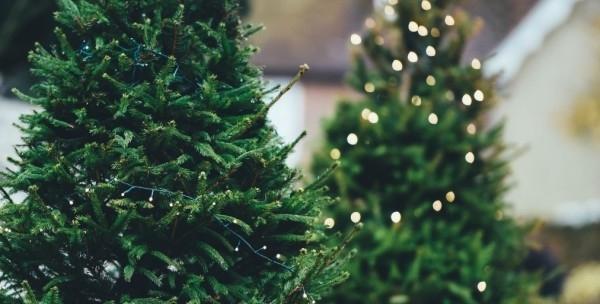 У Франківську новорічні ялинки продаватимуть на чотирьох ринках