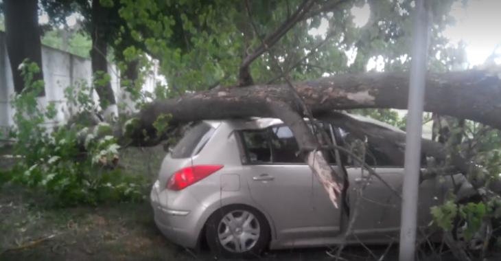 Град як горох і розтрощений деревом автомобіль: на Прикарпатті зіпсувалася погода. ФОТО 1