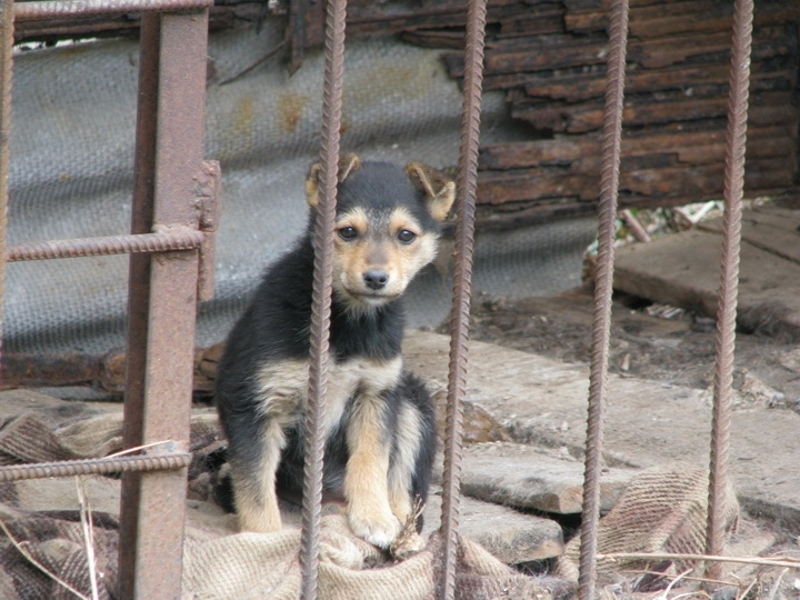 У Франківському «Домі Сірка» бракує їжі для тварин