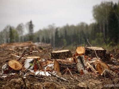 """Результат пошуку зображень за запитом """"Злочин проти довкілля виявили працівники лісництва. У його вчиненні обґрунтовано підозрюють одного з мешканців району."""""""