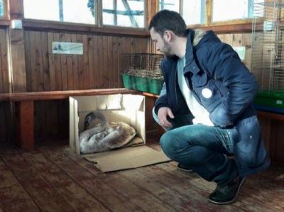 """Результат пошуку зображень за запитом """"Муніципальна варта 3 дні ловила лебедя на Німецькому озері, аби його врятувати"""""""