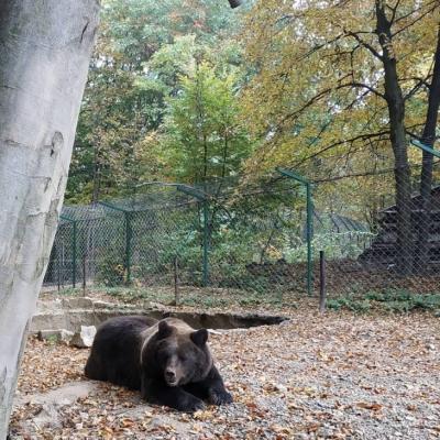 У Центр реабілітації диких тварин Галицького НПП пускатимуть лише екскурсії – вільне відвідування заборонили