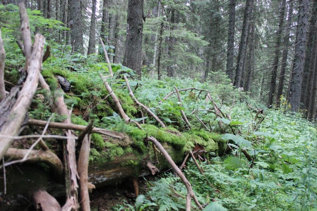 Карпатські праліси і високі полонини: КУРС побував у місцях, де ведмеді приходять у гості 8