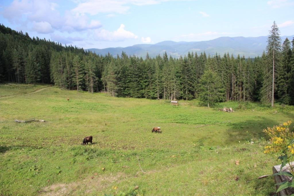 Карпатські праліси і високі полонини: КУРС побував у місцях, де ведмеді приходять у гості 38