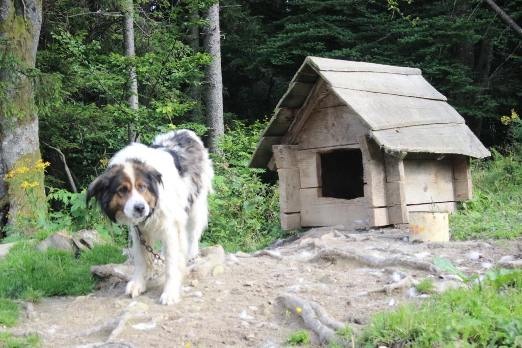 Карпатські праліси і високі полонини: КУРС побував у місцях, де ведмеді приходять у гості 42